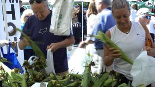 Greenwich Farmers Market Transitions into Fall
