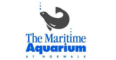 Maritime Aquarium To Host Fish School For Teachers
