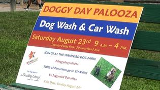 Community Event to Support Stamford Pets & Owners