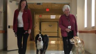 Therapy Dogs Bring Cheer to Hospital Patients