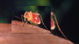 Mosquitoes Test Positive for West Nile in Stamford